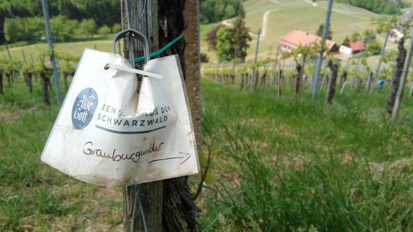 Wijn uit Baden, de Grauburgunder van Alde Gott