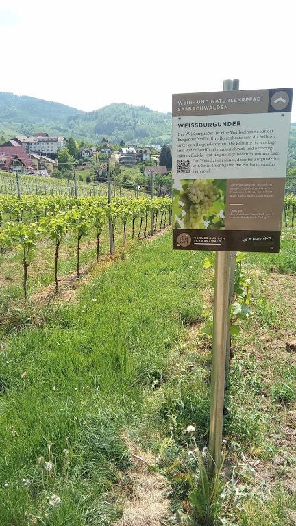 Wijn uit Baden weissburgunder