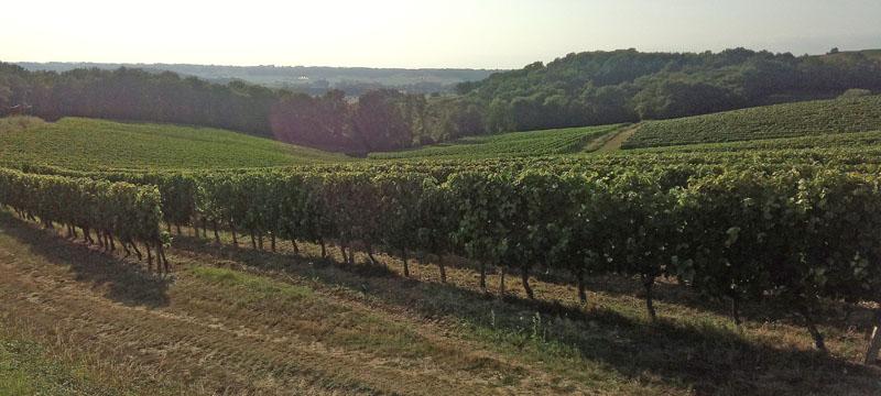 Glooiende wijngaarden, prachtige heuvels in het zuidwesten van Frankrijk