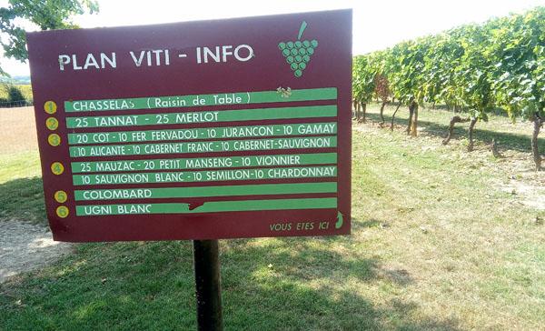 Plaimont producteurs, diverse lokale druivenrassen geven de wijnen van plaimont een eigen gezicht