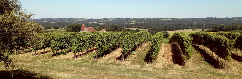 Wijngaard in Madiran