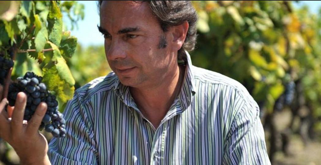 Primitivo is de druif uit Zuid-Italië Gregory petrucci felline