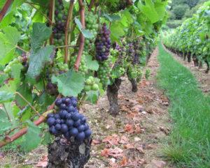 meer wijn gemaakt in de wereld, bourgogne heeft veel wijn gemaakt in 2018