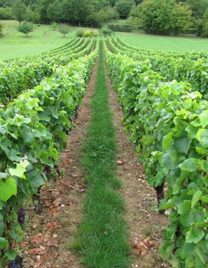 meer wijn gemaakt in de wereld en ook in Frankrijk