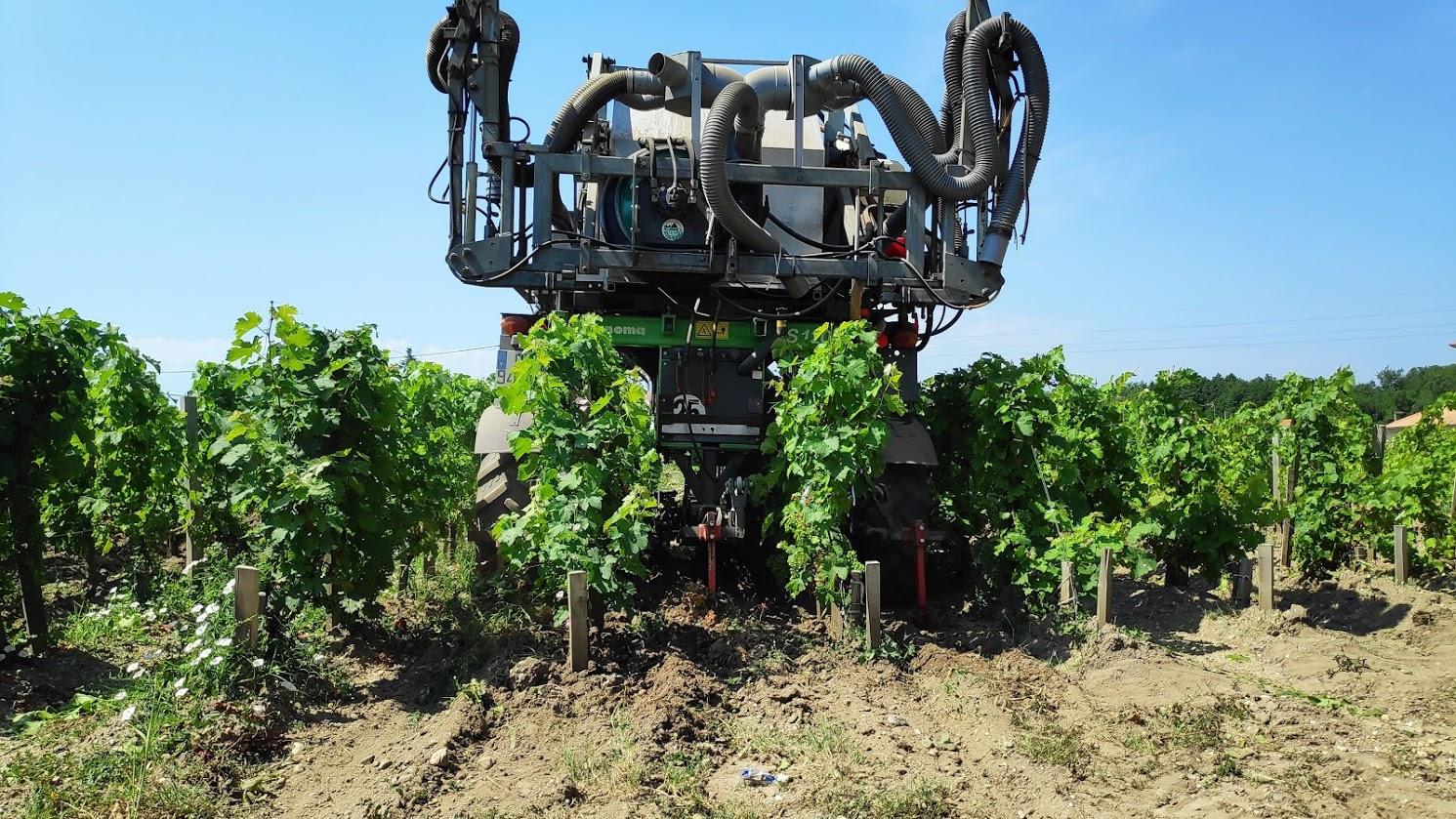 De lekkerste wijnen komen uit de Languedoc