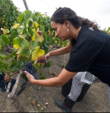 vrouwelijke wijnmakers op de canarische eilanden - tamara cruz