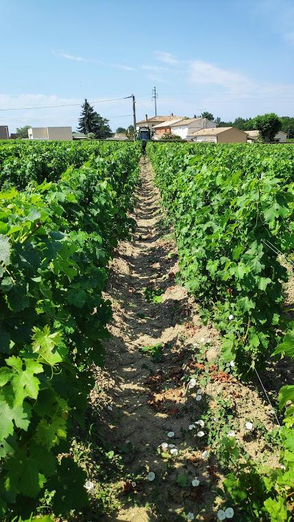Château Prieuré-Lichine en de wijngaarden