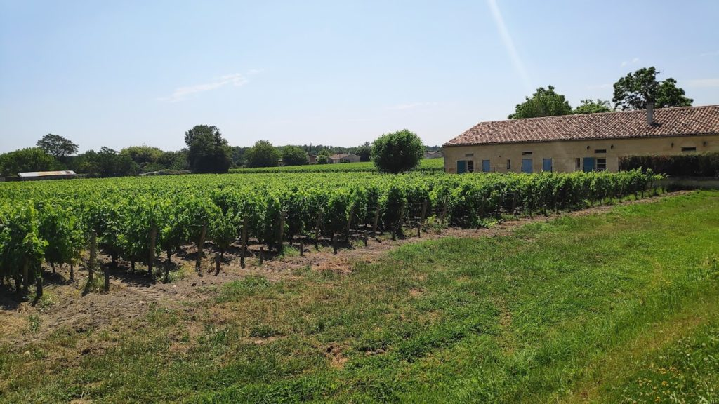 Château Prieuré-Lichine wijngaarden