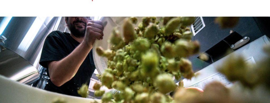 nederlandse streekwijnen druiven oogst