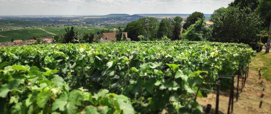 Champagnehuis Charles Heidsieck , uitzicht over de wijngaarden in de champagne