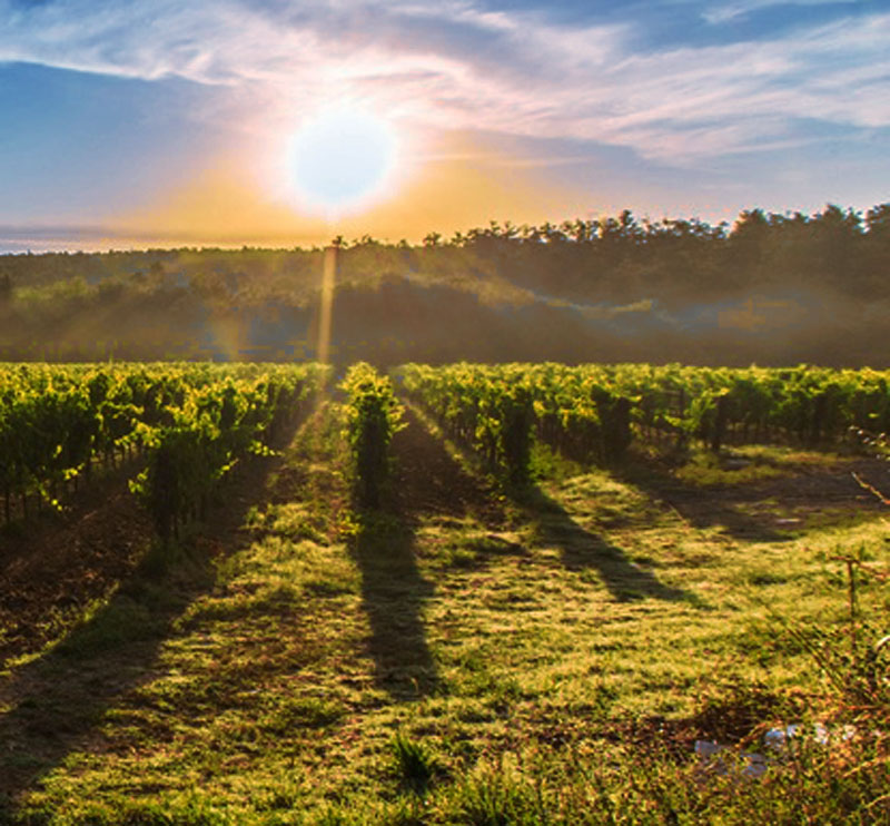De wereld van Italiaanse wijn