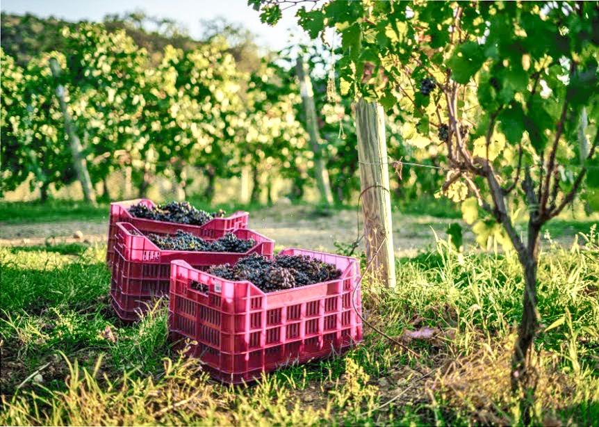Italiaanse wijnen behoren tot de mooiste wijnen ter wereld. Nergens vind je zoveel verschillende druivenrassen. Lees hier alles over Italiaanse wijnen en zijn mooie wijnstreken