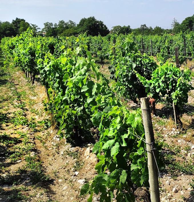 De nieuwe James Bond-film is net gearriveerd en iedereen wordt weer wild. Ook de wijnwereld in Bordeaux wordt weer wild, want ditmaal geen Heineken of Bollinger, maar een heus Saint-Emilion Château strijkt met de eer.